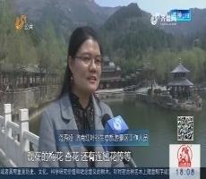 济南:赏花踏青扎堆 各大景区附近交通拥堵