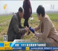 夏津:发愁!大片小麦出现发黄干枯的情况
