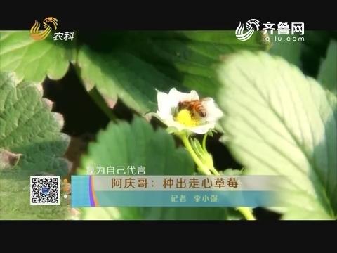 【为自己代言】阿庆哥:种出走心草莓