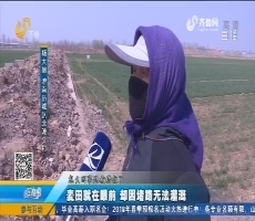 济南:麦田就在眼前 却因堵路无法灌溉