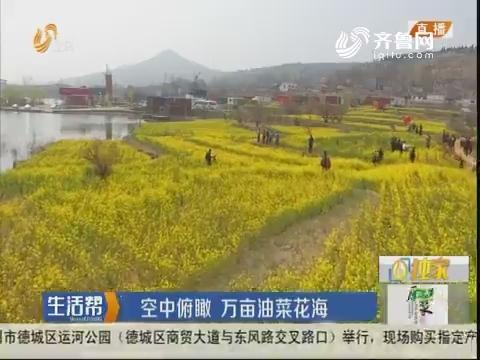 济南:空中俯瞰 万亩油菜花海