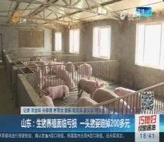 山东:生猪养殖面临亏损 一头猪要赔掉200多元