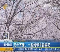 【4G直播】花开齐鲁:一起到邹平赏樱花