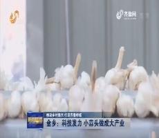 【推动乡村振兴 打造齐鲁样板】金乡:科技发力 小蒜头做成大产业