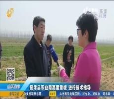 夏津县农业局高度重视 进行技术指导