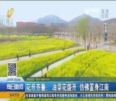 【4G直播】花开齐鲁:油菜花盛开 仿佛置身江南
