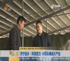 【闪电新闻排行榜】济宁金乡:科技发力 小蒜头做成大产业