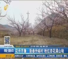 花开齐鲁:新泰外峪村 粉红杏花满山坳