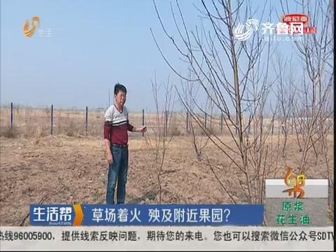潍坊:草场着火 殃及附近果园?