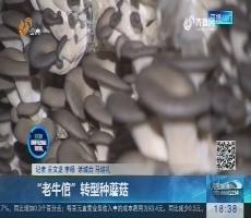 """潍坊:""""老牛倌""""转型种蘑菇"""