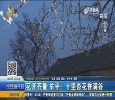【4G直播】花开齐鲁 牟平:十里杏花香满谷