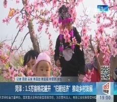 """菏泽:1.5万亩桃花盛开 """"归雁经济""""推动乡村发展"""