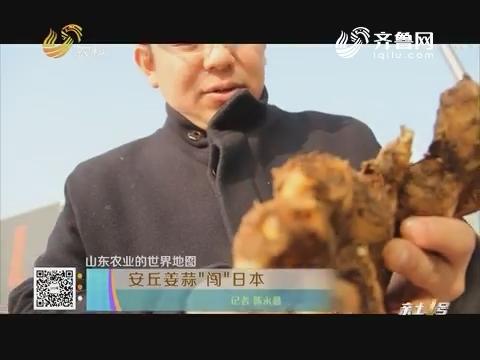 """【山东农业的世界地图】安丘姜蒜""""闯""""日本"""