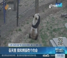 淄博:春天里 我和熊猫有个约会