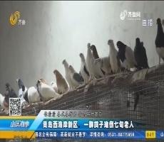 青岛西海岸新区:一群鸽子难倒七旬老人
