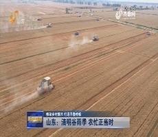 【推动乡村振兴 打造齐鲁样板】山东:清明谷雨季 农忙正当时