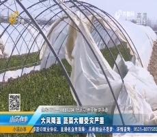 济阳:大风降温 蔬菜大棚受灾严重