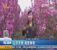 【4G直播】聊城:花开齐鲁 海棠争艳