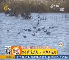 济南:男子街头逗鸟 引来市民驻足