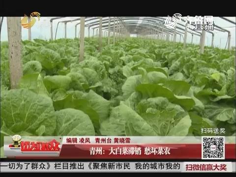 青州:大白菜滞销 愁坏菜农