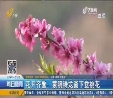 花开齐鲁:蒙阴腾龙崮下赏桃花