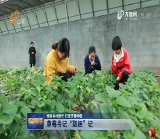 """【推动乡村振兴 打造齐鲁样板】草莓书记""""取经""""记"""