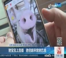 济宁:猪宝宝上直播 猪倌眼界宽销售准