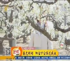 【齐鲁最美乡村】春光明媚 阳信万亩梨花盛放