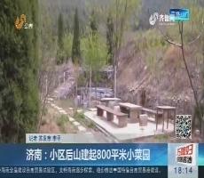 济南:小区后山建起800平米小菜园