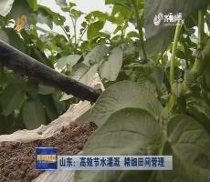山东:高效节水灌溉 精细田间管理