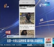 【新说法】北京一大妈公园挖野菜 草坪蒲公英被挖完