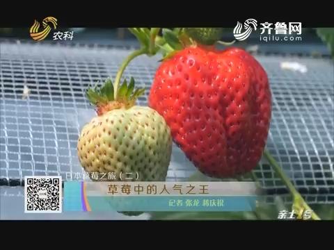 日本草莓之旅(二)草莓中的人气之王