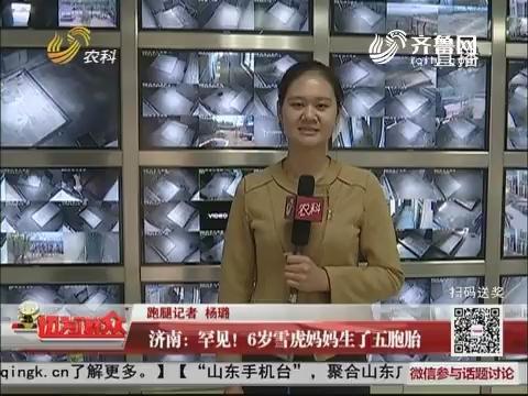 济南:罕见!6岁雪虎妈妈生了五胞胎