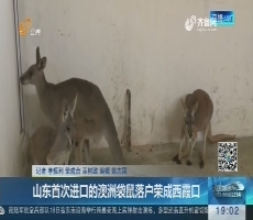 山东首次进口的澳洲袋鼠落户荣成西霞口