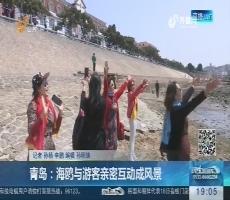 青岛:海鸥与游客亲密互动成风景