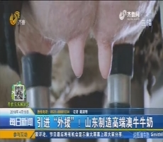 """引进""""外援""""!山东制造高端澳牛牛奶"""