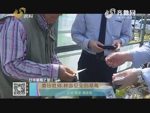 【日本草莓之旅(三)】鹿田盛师:种出安全的草莓