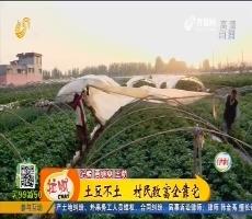 【齐鲁最美乡村】滕州:土豆不土 村民致富全靠它