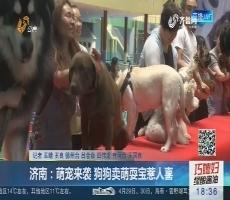 济南:萌宠来袭 狗狗卖萌耍宝惹人喜