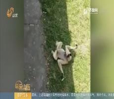 """【闪电新闻排行榜】安徽合肥:家长带娃向动物吐口水 你会是下一个""""熊家长""""吗?"""