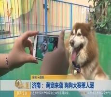 济南: 萌宠来袭 狗狗大赛惹人爱