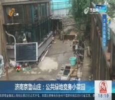 【闪电连线】济南京鲁山庄:公共绿地变身小菜园