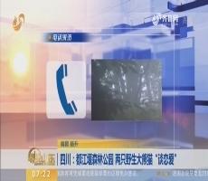 """四川:都江堰森林公园 两只野生大熊猫""""谈恋爱"""""""