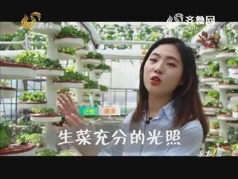 【第十九届寿光菜博会特别节目】螺旋立柱式栽培