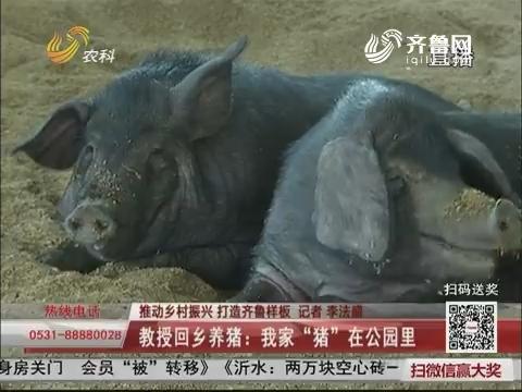 """【推动乡村振兴 打造齐鲁样板】教授回乡养猪:我家""""猪""""在公园里"""