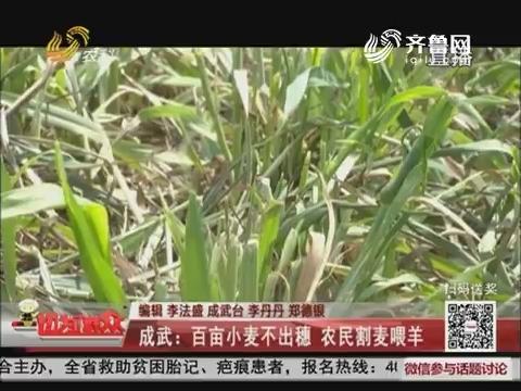 成武:百亩小麦不出穗 农民割麦喂羊