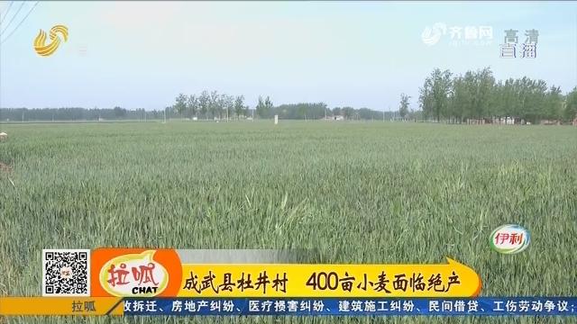 成武县杜井村 400亩小麦面临绝产