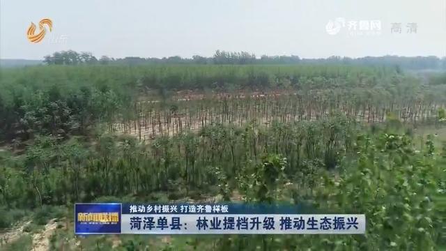 【推动乡村振兴 打造齐鲁样板】菏泽单县:林业提档升级 推动生态振兴