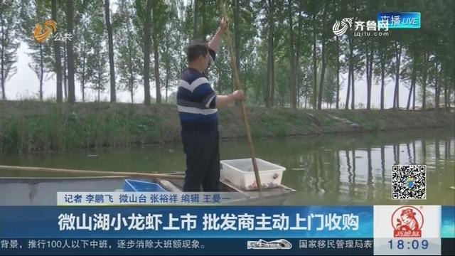 济宁:微山湖小龙虾上市 批发商主动上门收购