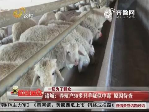 诸城:养殖户50多只羊疑似中毒 原因待查